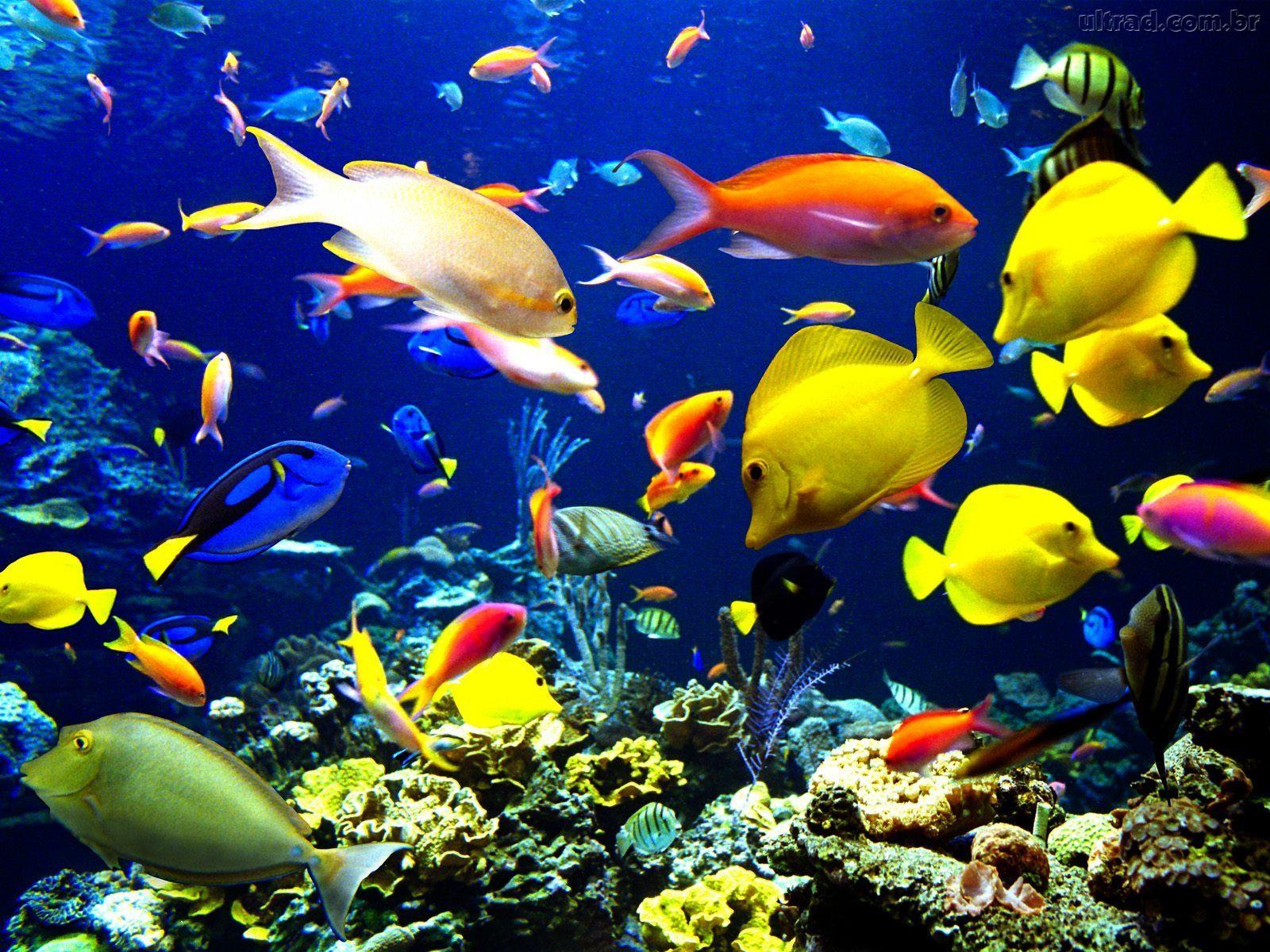 1_peixes