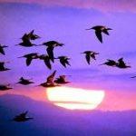 Até as aves sabem o caminho