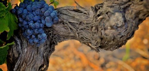 grape_2-wallpaper-1440x900