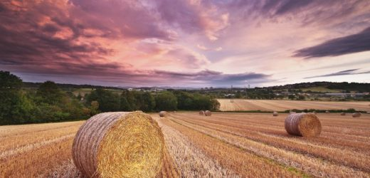magical_harvest-wallpaper-960x600